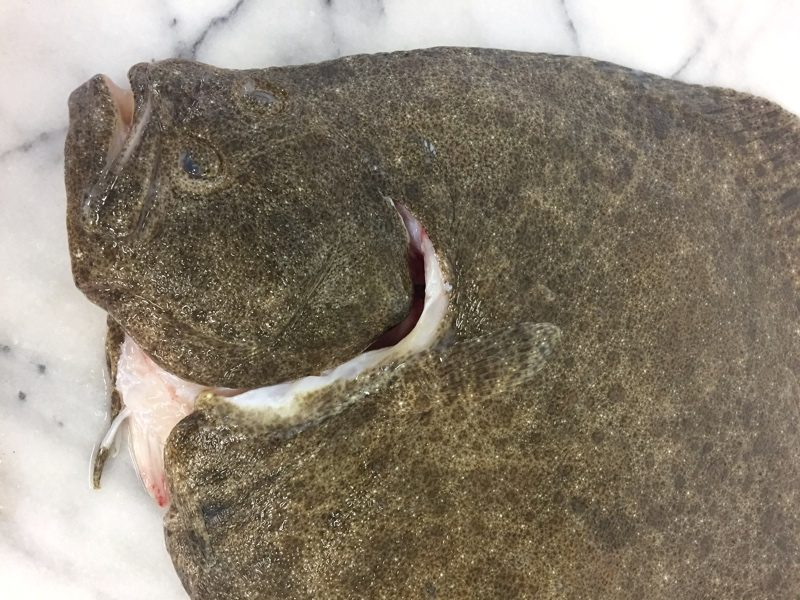 Turbot Wild Local Whole Gutted(filleted On Request)