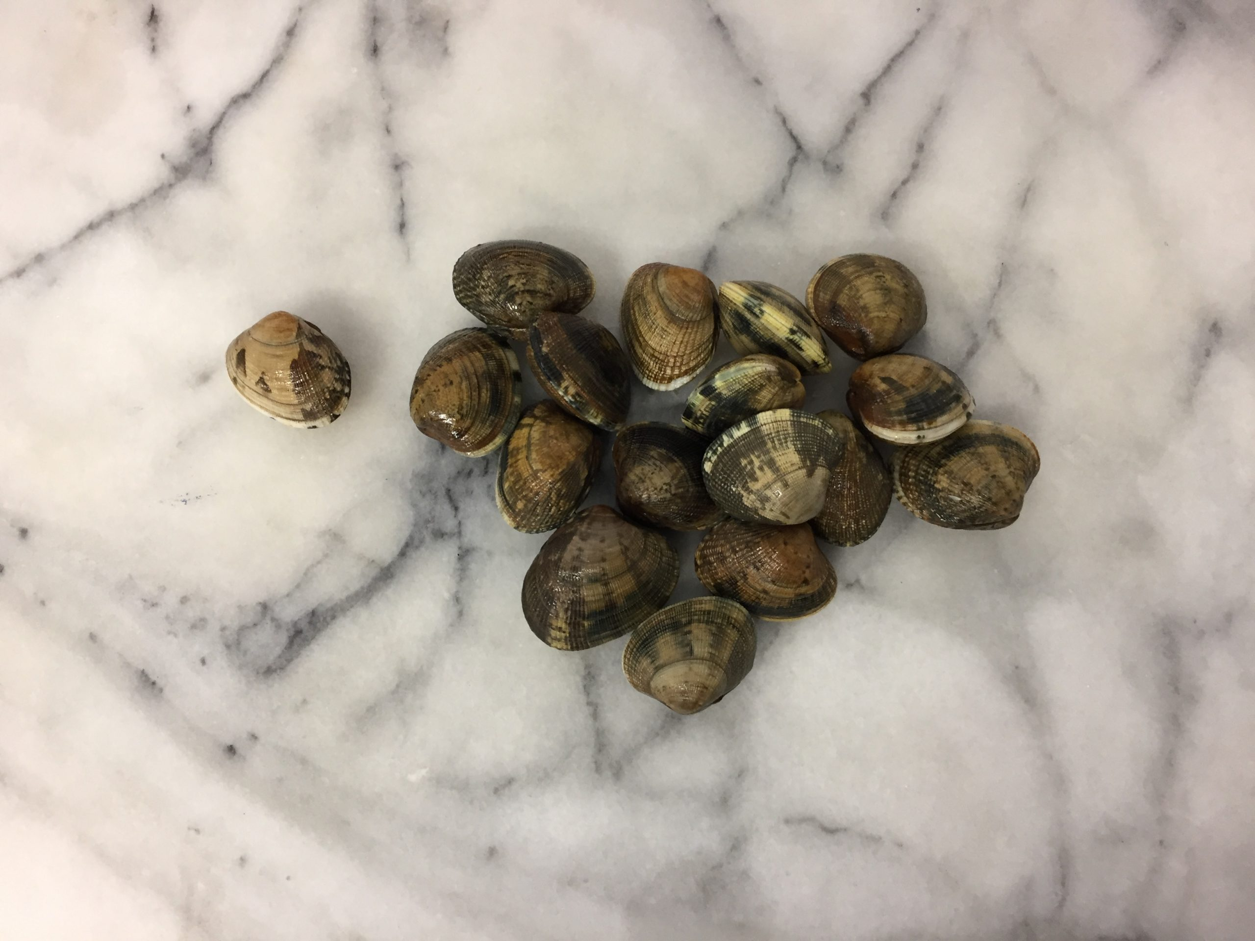 Clams Palourdes 500g