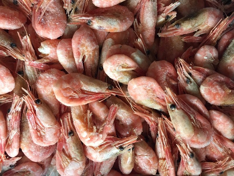 North Atlantic Cold Water Cooked Prawns Frozen